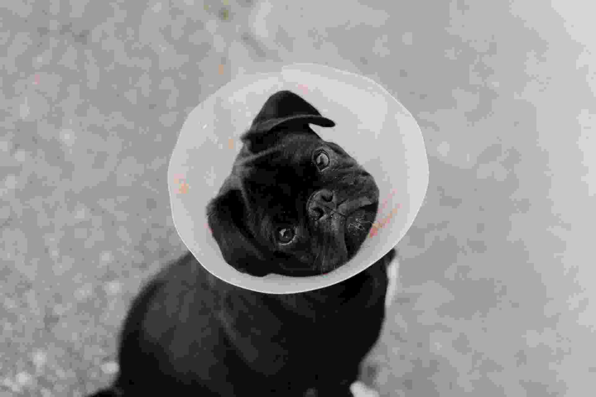 Kosten Sterilisatie Hond