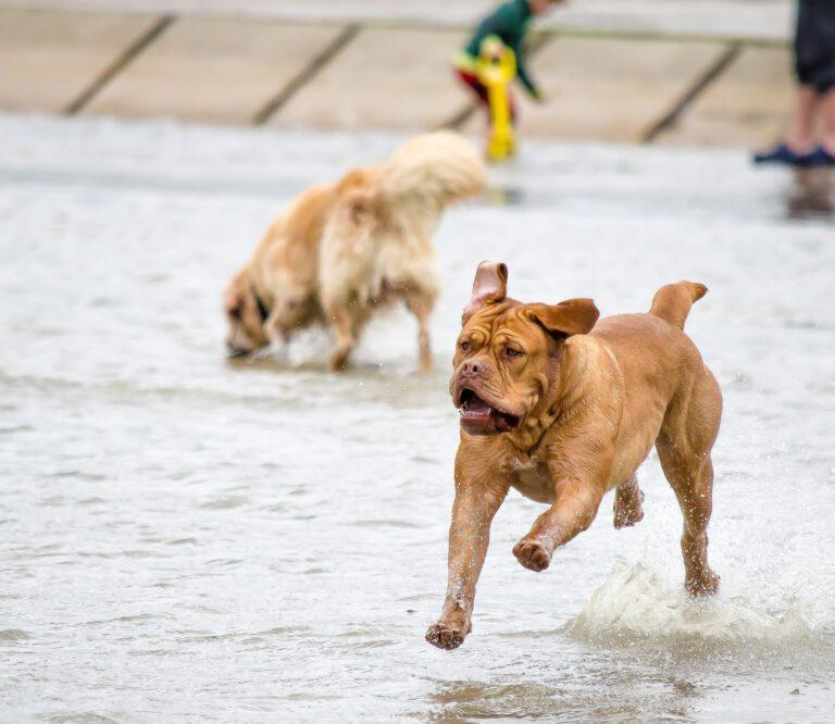 Hondenspeeltuin