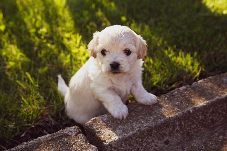 Waarom we puppy's schattig vinden